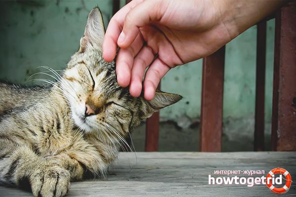 Как сделать кошку ласковой: полезные советы