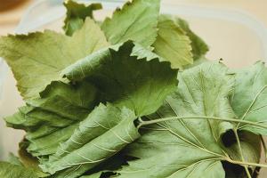 Как сушить листья смородины для чая