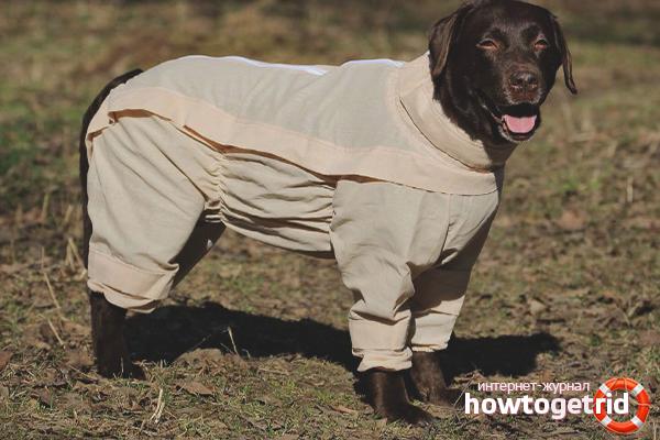 Как защитить собаку от клещей: 9 способов