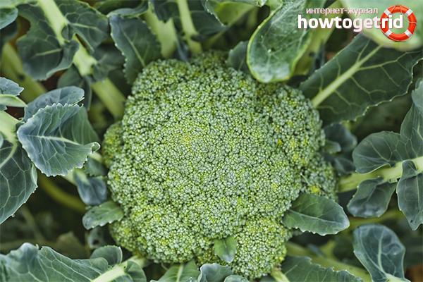 Когда и чем подкормить капусту брокколи