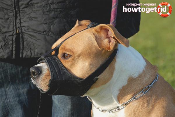 Выбор намордника для собаки