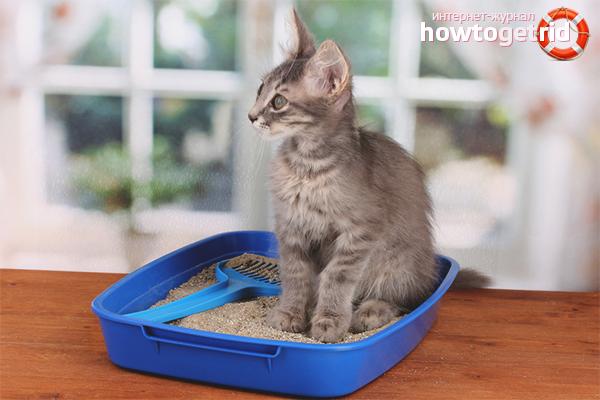 Как приучить кошку к лотку: полезные советы