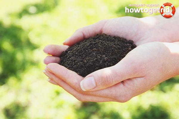 Как сделать почву плодородной: полезные советы