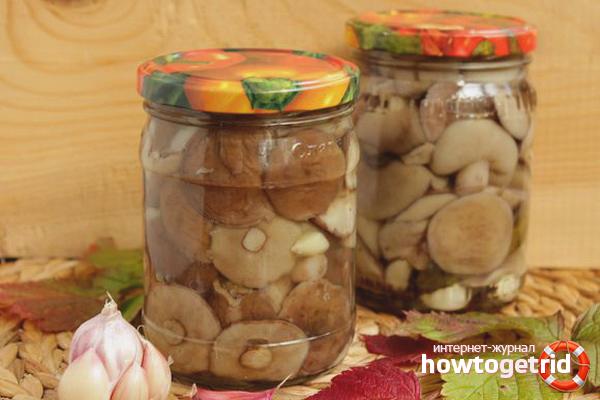 Как мариновать маслята на зиму: 8 рецептов