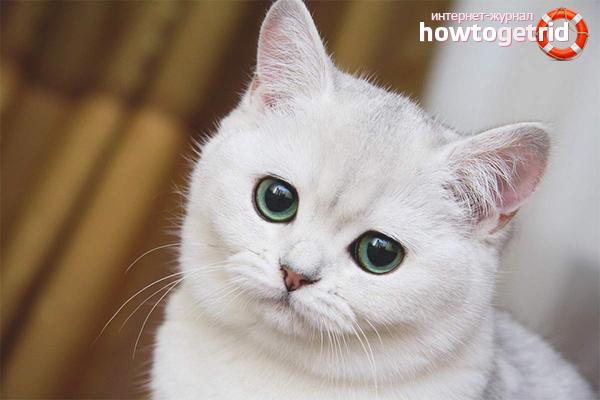 Почему кошка стала писать где попало