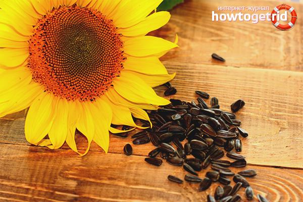 Польза и вред подсолнечных семян при беременности