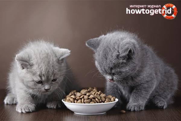 Как приучить котёнка к сухому корму: полезные советы