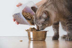 Чем насильно кормить кота