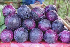 Польза и вред краснокочанной капусты
