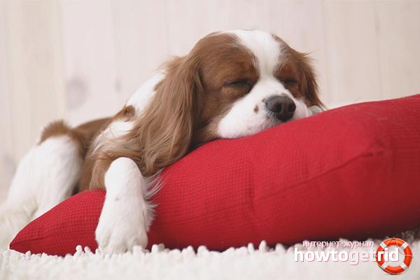 Как приучить щенка спать ночью: полезные советы