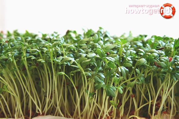 Кресс-салат при простудах и наружном применении