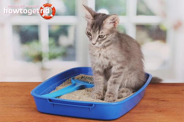 Что поможет коту от запора в домашних условиях 820