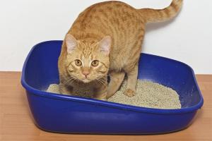 Что делать, если кот не может сходить в туалет по-маленькому