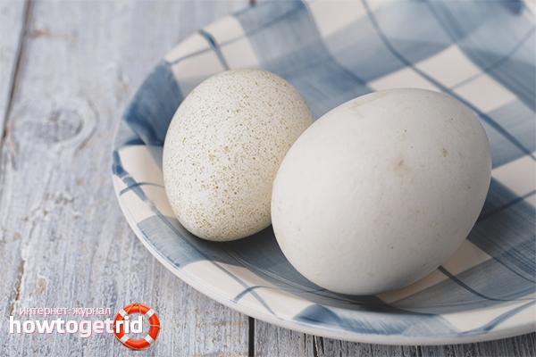 Можно употреблять в пищу гусиные яица