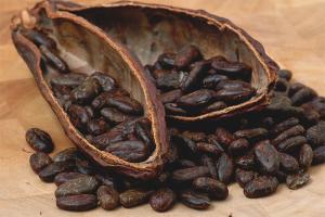 Польза и вред какао бобов
