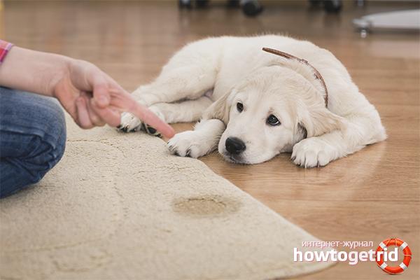 Как отучить собаку гадить в неположенном месте