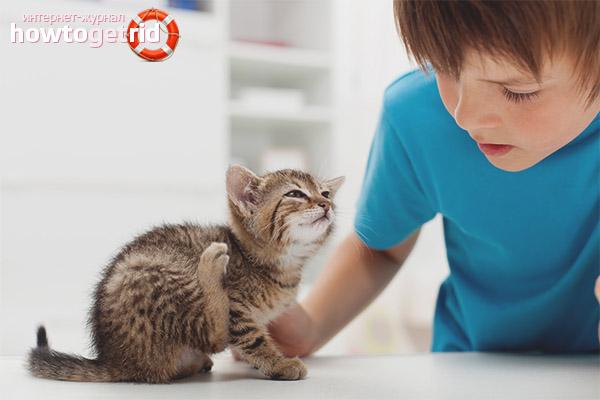 BRIT CARE корм для кошек: отзывы, где купить, состав