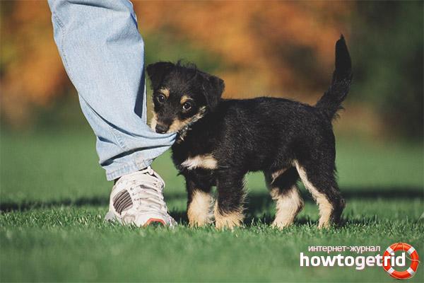 Как отучить щенка кусаться и хватать за ноги