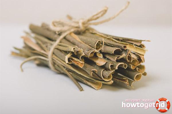 Лечебные свойства и противопоказания коры осины