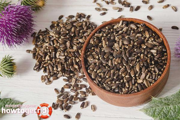 Лечебные свойства и противопоказания семян расторопши