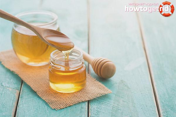 Лечебные свойства меда донника