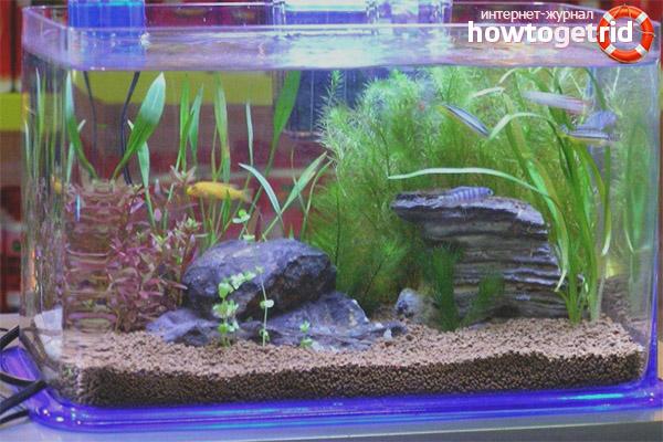 Как сделать чтобы вода в аквариуме была чистой 65