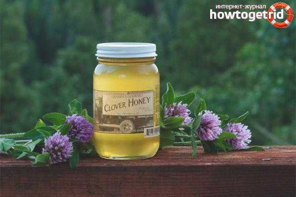 Как выбрать клеверный мед