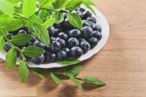 Лечебные свойства и противопоказания листьев черники