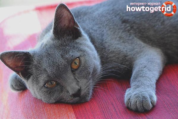 Происхождение картезианской кошки