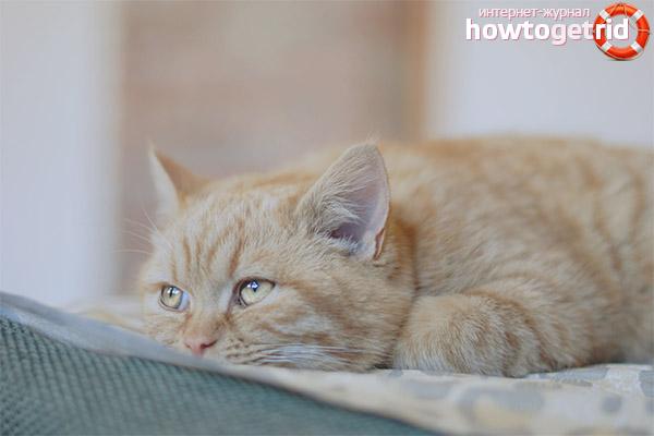 Изменение температуры у кошки после операции по стерилизации