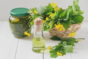 Лечебные свойства и противопоказания чистотела