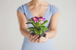 Можно ли дарить цветы в горшках