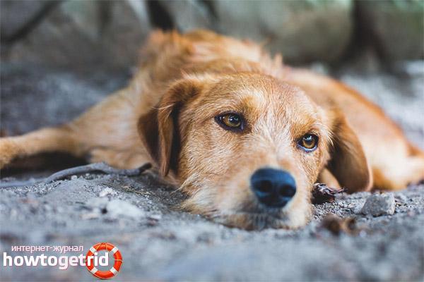 Борьба с депрессией у собак