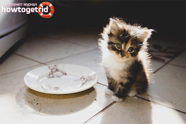 Чем кормить котенка при поносе
