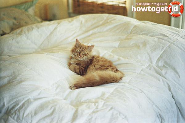 Что делать, если кошка писает в кровать