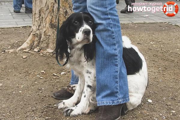 Что делать, если собака боится других собак