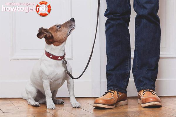 Как оставить собаку одну дома