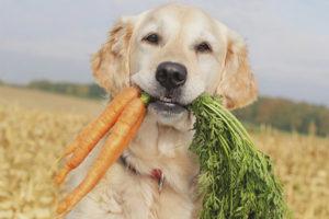 Какие овощи и зелень можно собаке