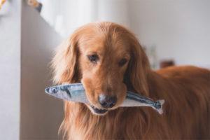 Можно ли давать собакам рыбу