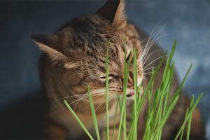 Почему и зачем кошки едят траву