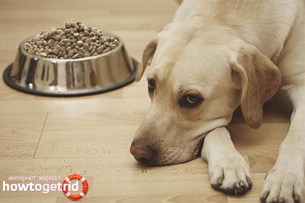 Почему здоровая собака не ест
