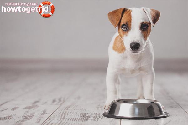 Сколько раз в день нужно кормить щенка