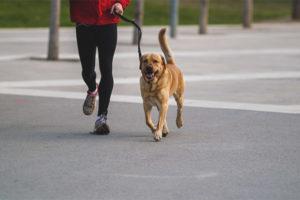 Сколько раз в день выгуливать собаку