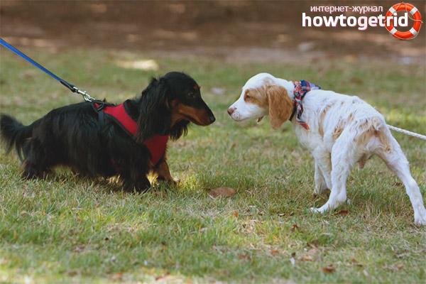 Собака боится других собак