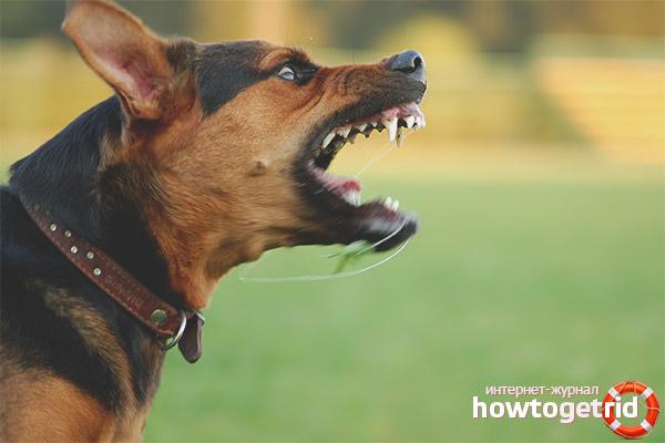 Собака стала агрессивной
