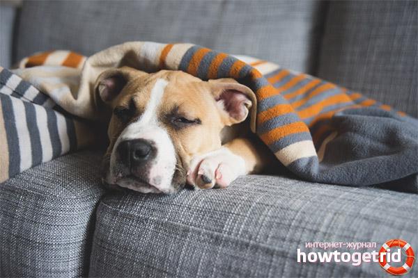 Зимняя или послеродовая депрессия у собак