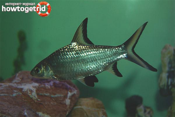 Акулий балу
