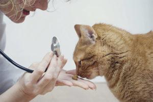 Аллергия на корм у кошек