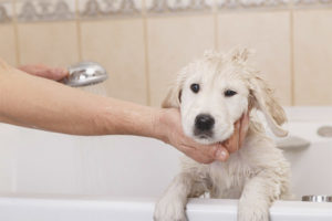 Можно ли мыть собаку после прививки