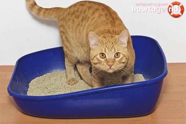 Повторное приучение кошки к лотку